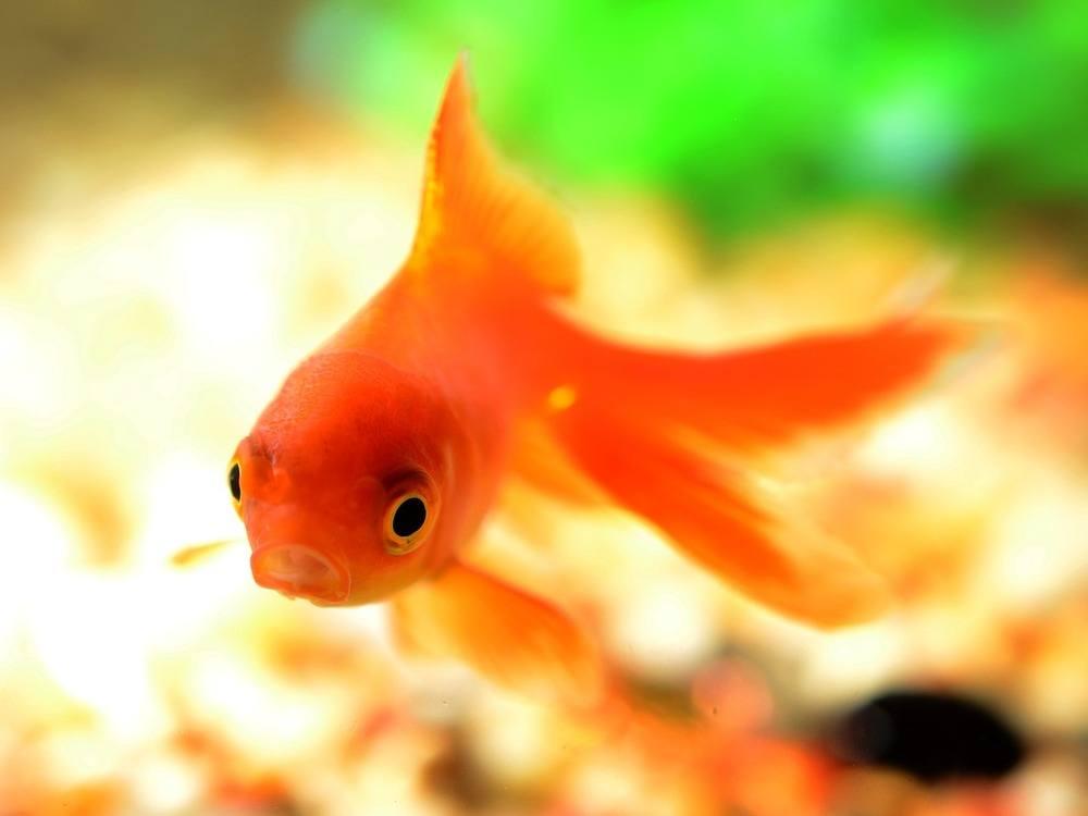 ganska fisk dating Interracial dating centrala klagomål
