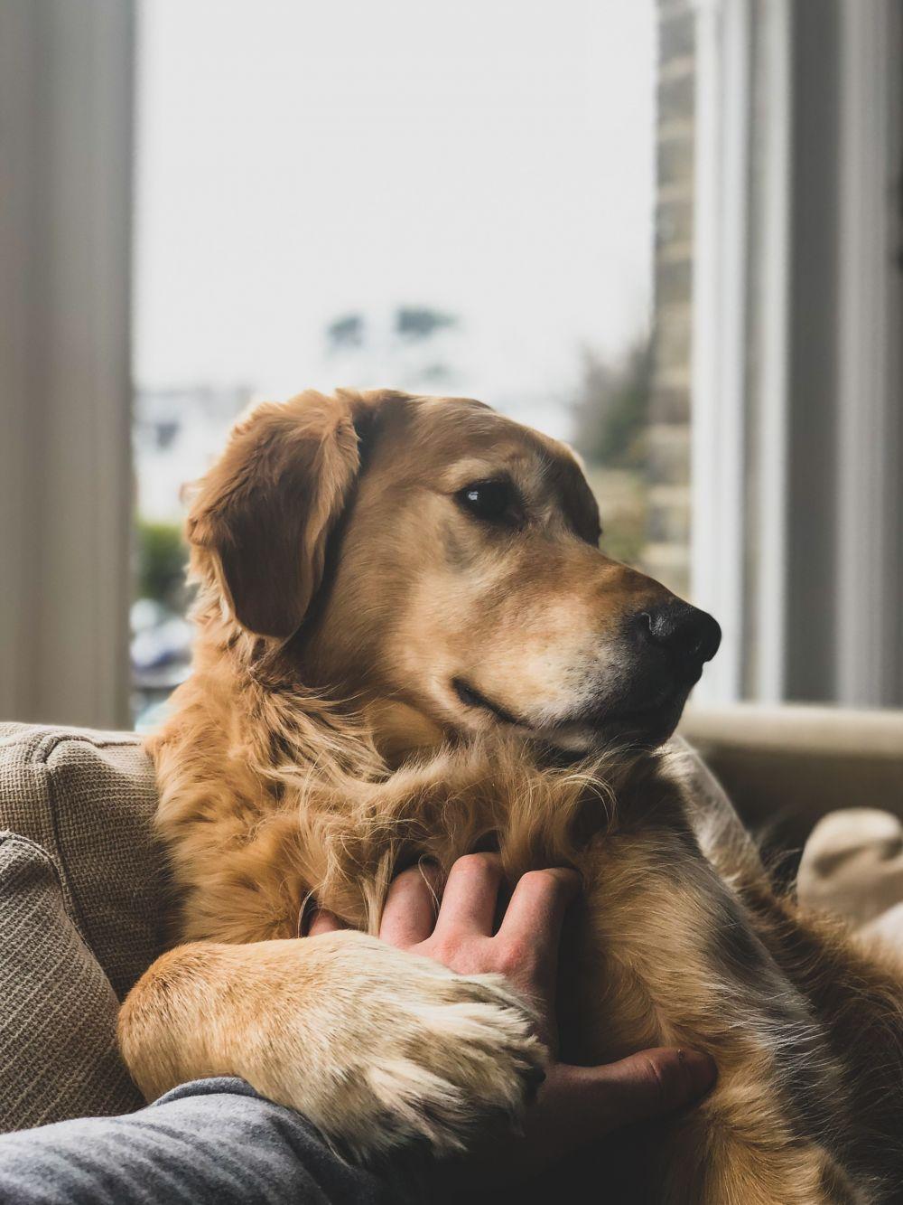 Du måste älska hund dating